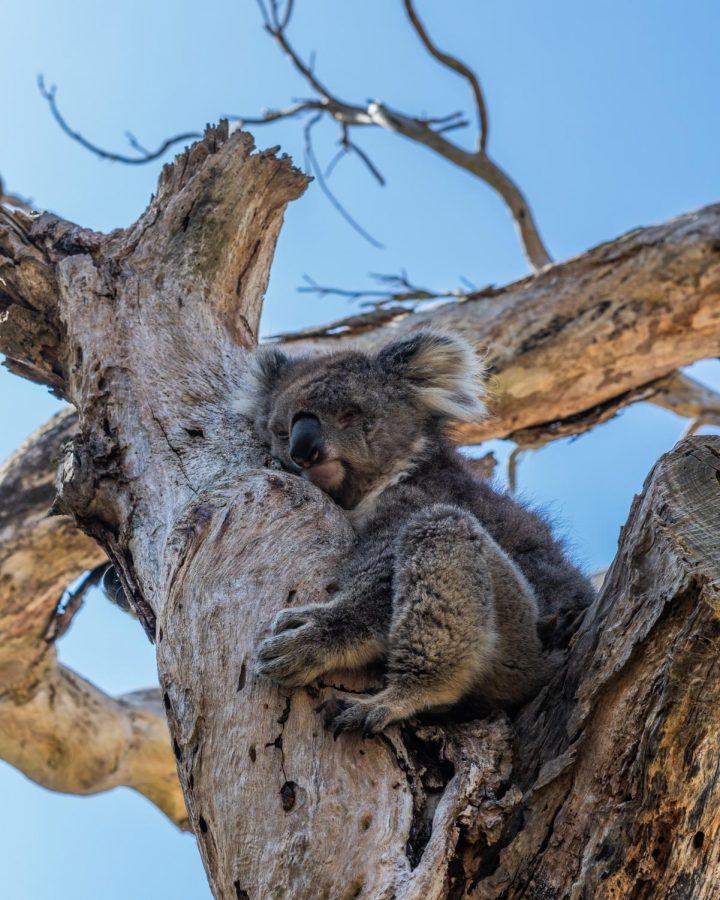 Australian Fires Devastate Diverse Wildlife
